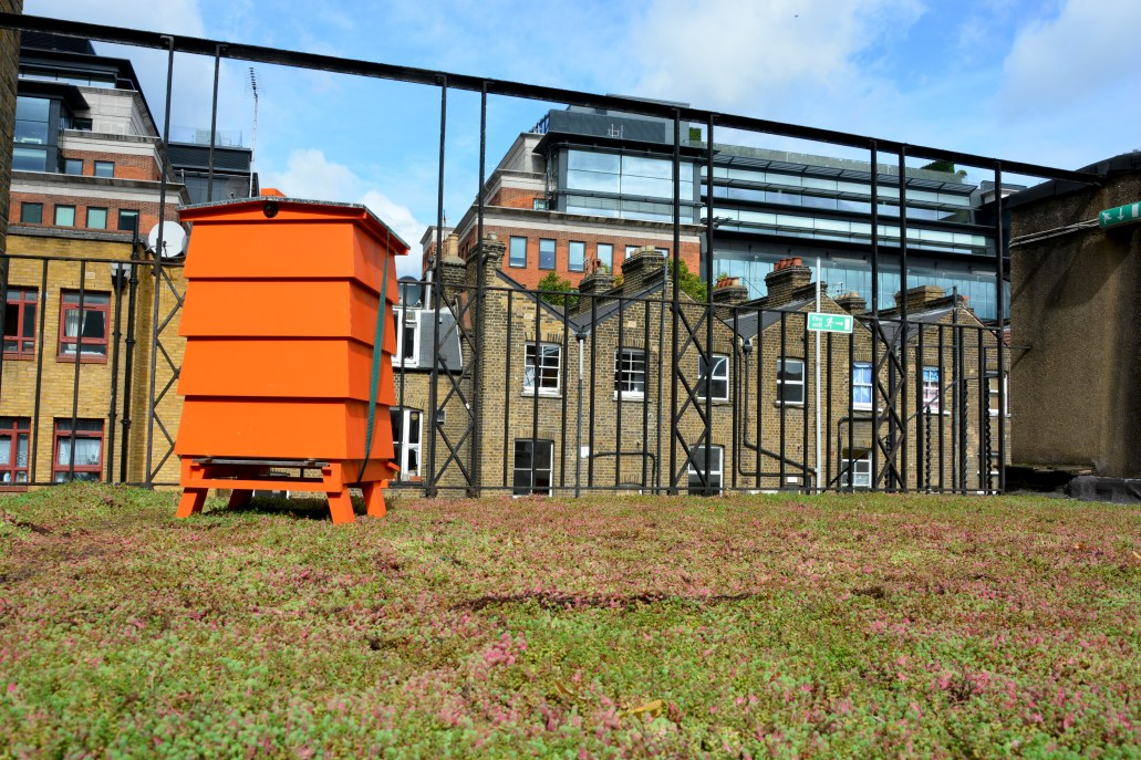 Včely a zelená záhrada na streche budovy Conway Hall. (Zdroj: https://conwayhall.org.uk/the-hive/)