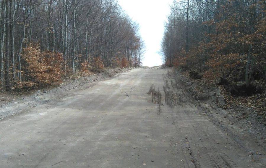 nova_cesta_v_lese